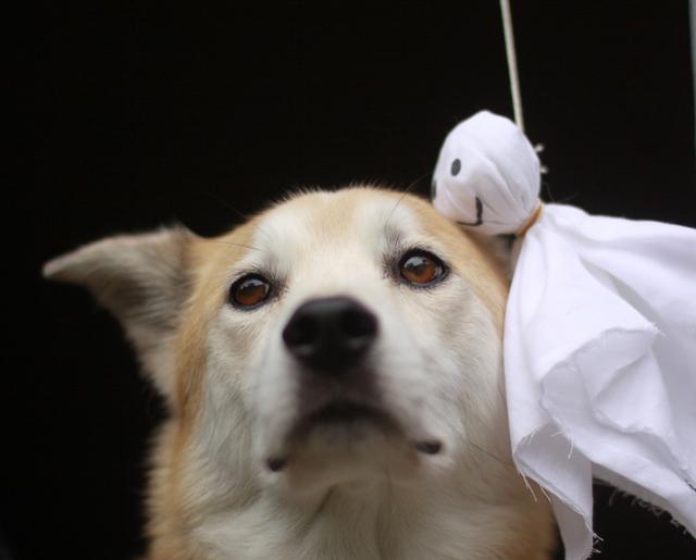 台風 犬猫 PET'S ALL RIGHT