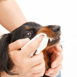ペット 歯磨き 歯ブラシ