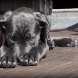 地震 犬 怖がる 対策