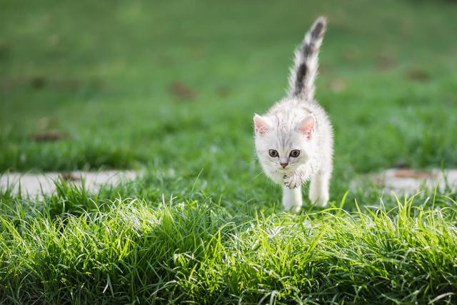 子猫 跳ねる