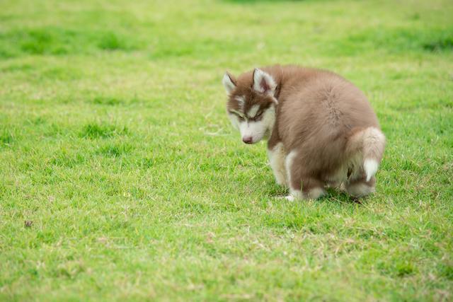 犬 おしっこ トレーニング