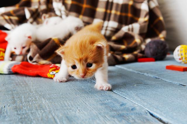 の 生まれ 子猫 たばかり