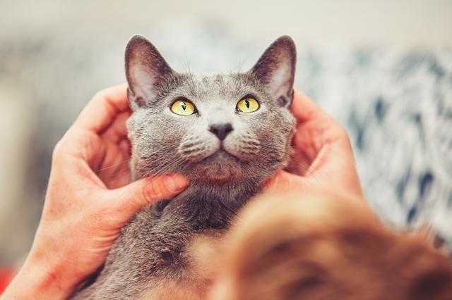 猫 ストレスサイン