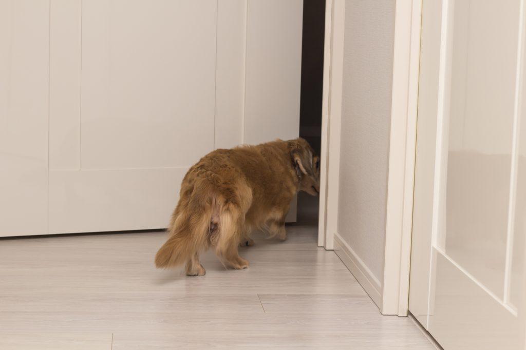 犬 室内運動