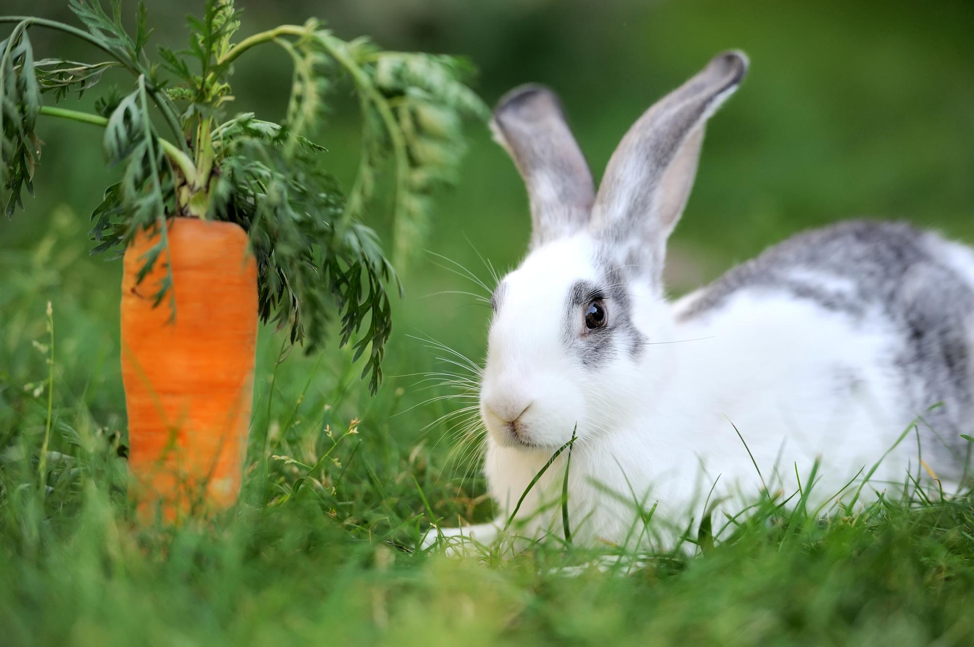 ウサギ 餌