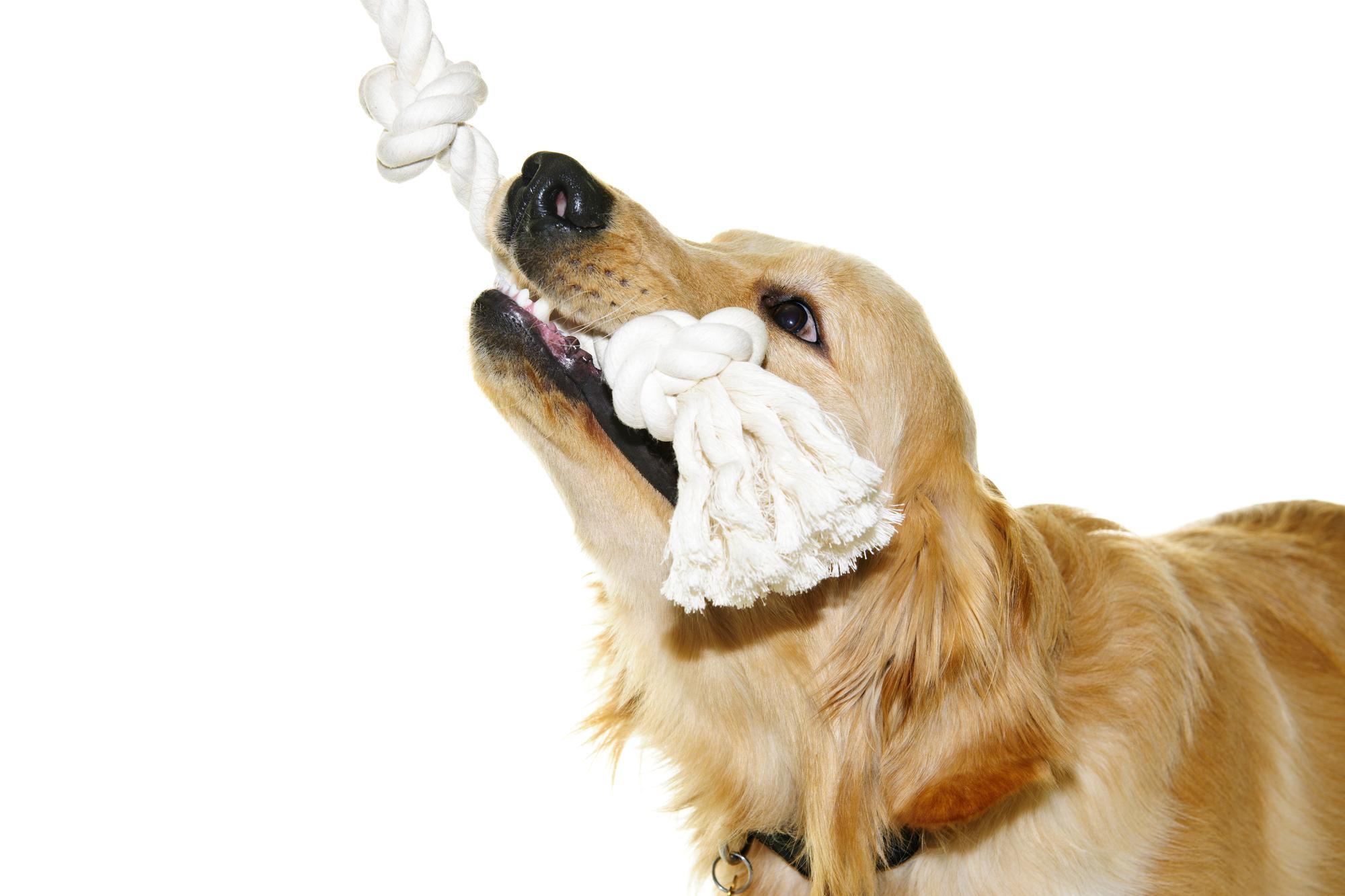 犬 熱中症