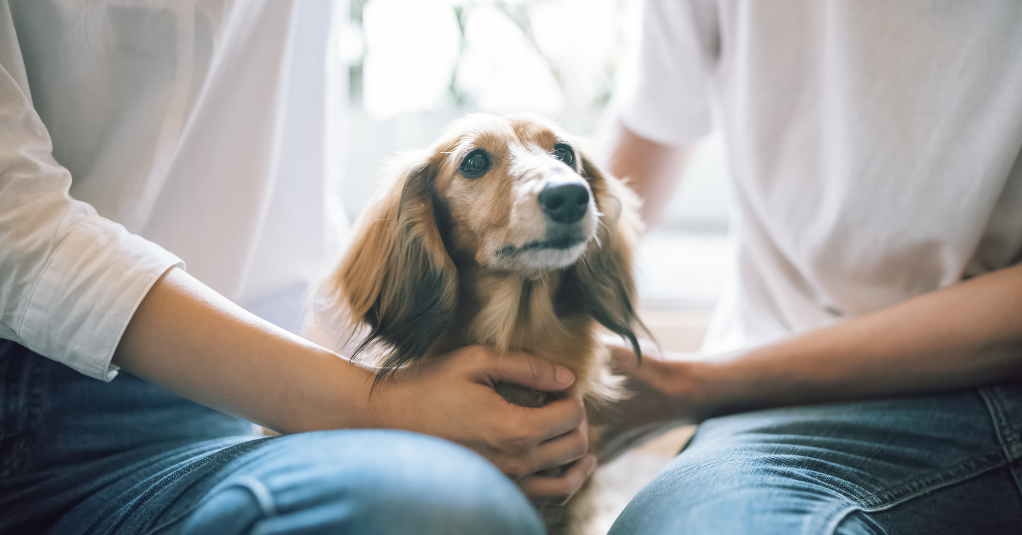犬 社会化