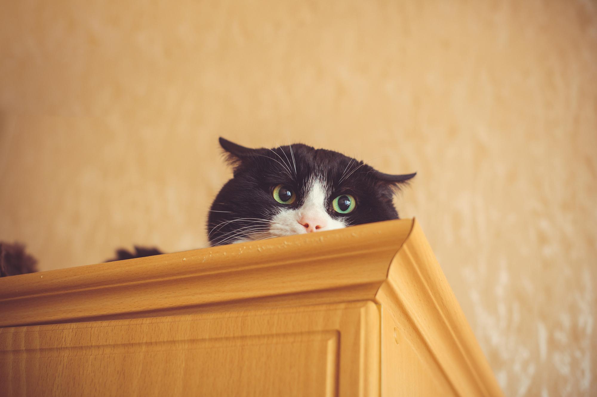 猫 飛び乗り