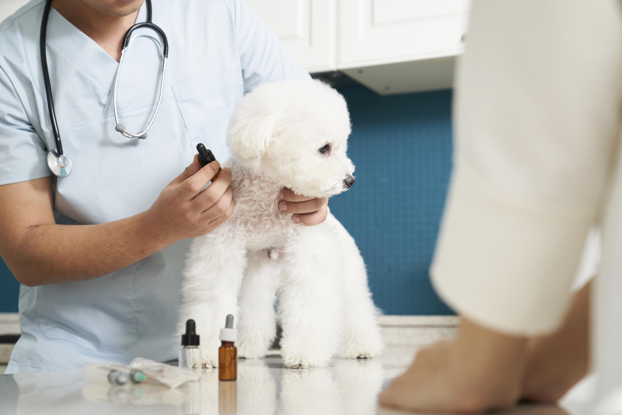 犬 アレルギー